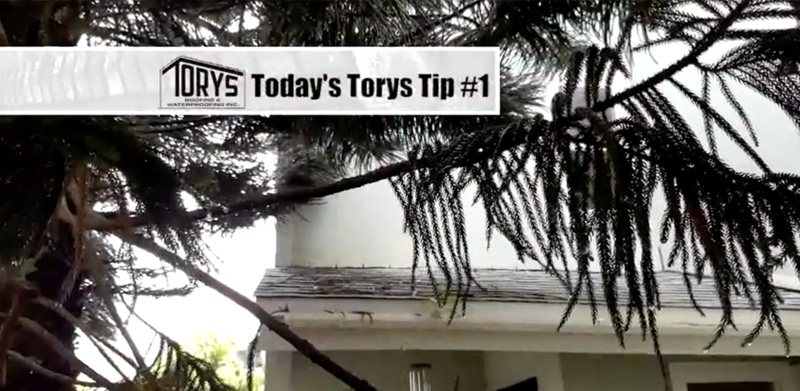Torys tip, Overhanging trees can damage your roof